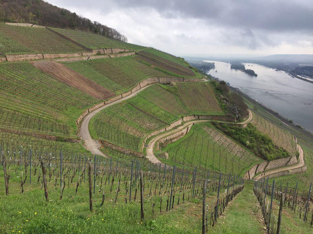 Weingutt-Corvers-Kauter3